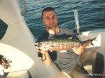 1998 Bonito pescado al Curri