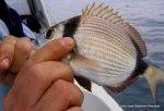 2006 Abril pesca frente a las costas de El Perello (13)