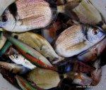 2006 Abril pesca frente a las costas de El Perello (2)