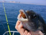2006 Abril pesca frente a las costas de El Perello (4)
