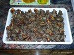 Caracoles de mar (1)