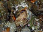 Caracoles de mar (2)