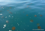 Medusas (1)