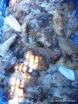 Noviembre 2002 Pesca de sepia (1)