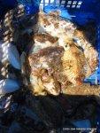 Noviembre 2002 Pesca de sepia (2)