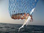 Pescando sepias