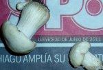 1-7-2011 Calocybe gambosa