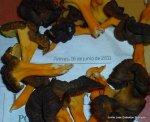 17-6-2011 Corduente