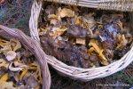 3-12-2008 Lutescens congeladas